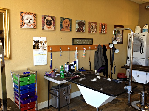 Are Dog Grooming Salons Clean