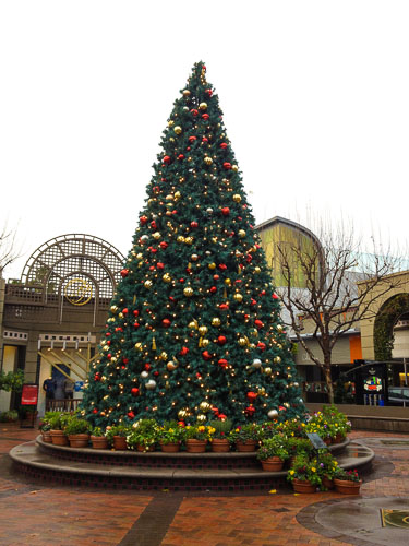 broadway-plaza-christmas-tree-2012-2