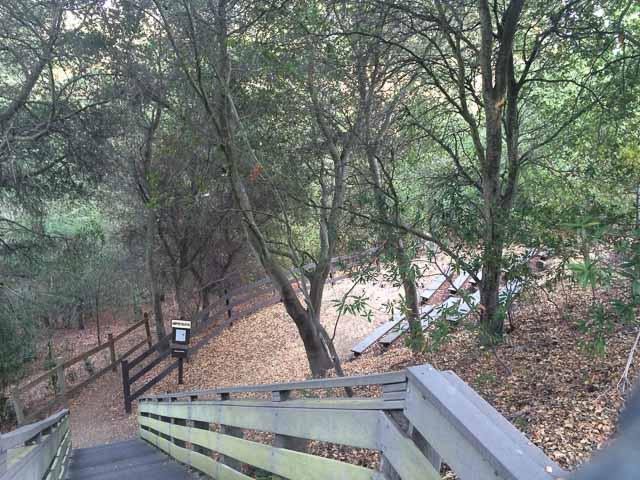 cindy-waxman-trail-amphitheatre-moraga-1