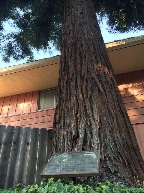 liberty-tree-lafayette