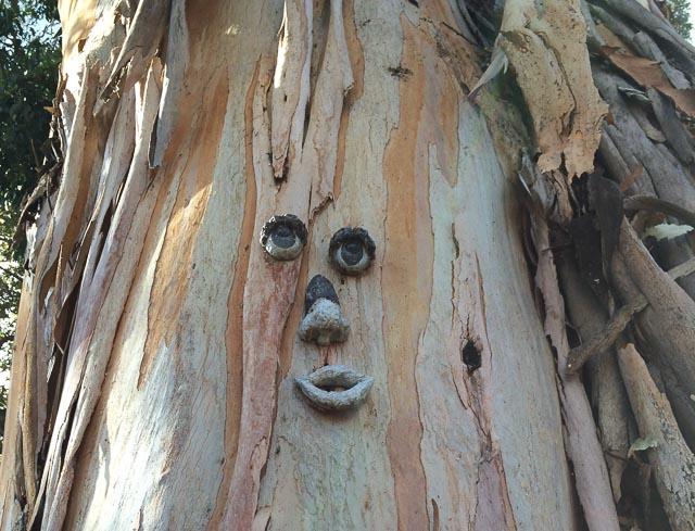 tree-face-walnut-creek