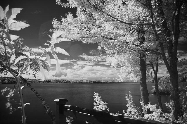 flickr-ennev-infrared