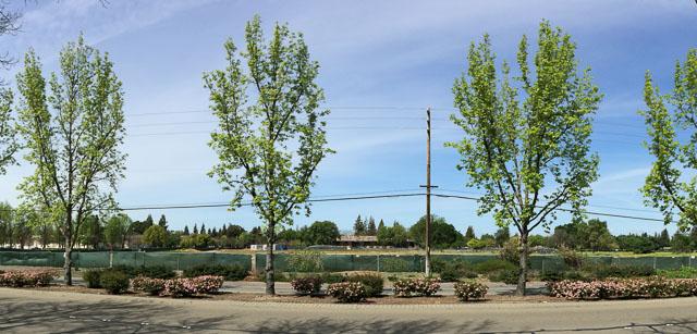 orchards-empty-walnut-creek