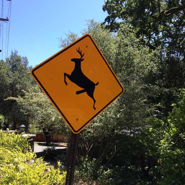 deer-sign-orinda