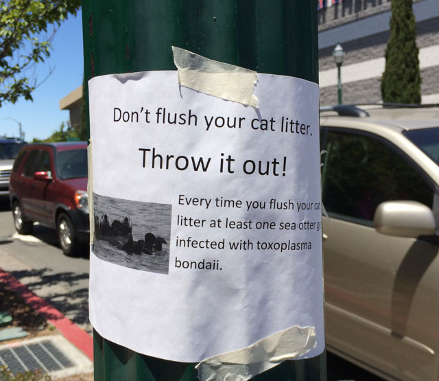 Flush Walnut Cat Litter