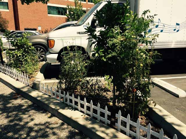 downtown-walnut-creek-garden