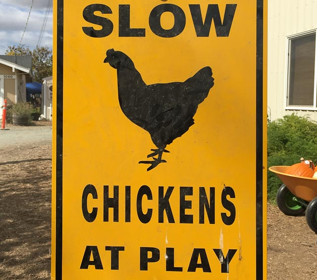 slow-chickens-at-play-sign