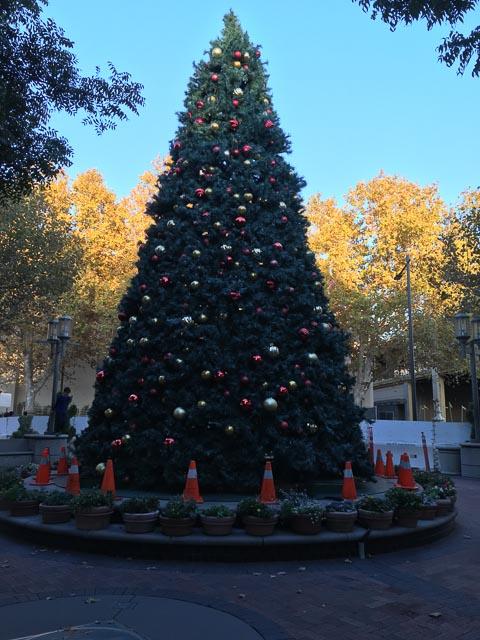 broadway-plaza-christmas-tree-2015