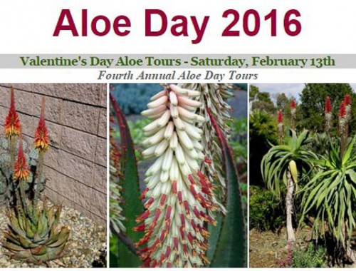 aloe-bancroft-2016