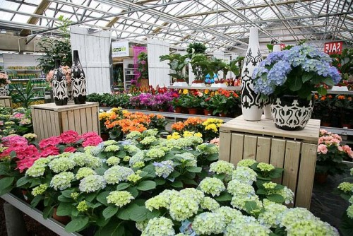 Friday Question Of The Day What Is Your Favorite Nursery Beyond The Creek