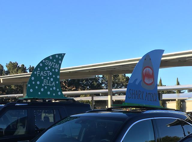 shark-fins-swim-club