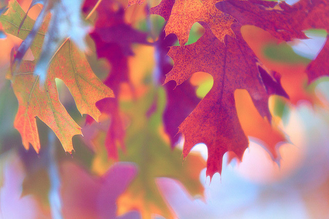 flickr-jdevaunphotography-leaves